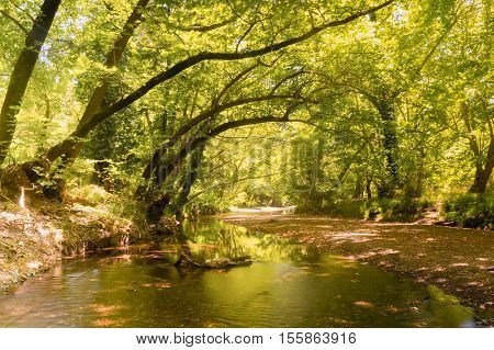 Beautiful landscape of the forest of Prokopi in  Euboea in Greece.