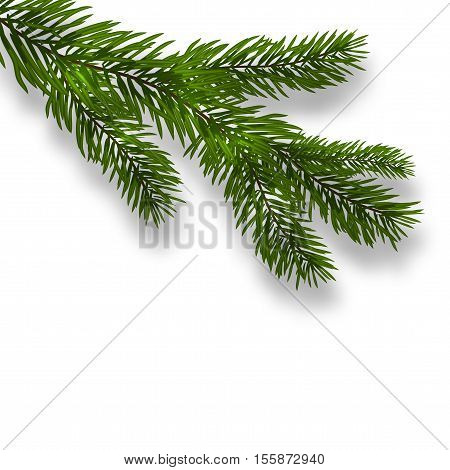 Green lush branch spruce and realistic shadows. Isolated white background. vector illustration