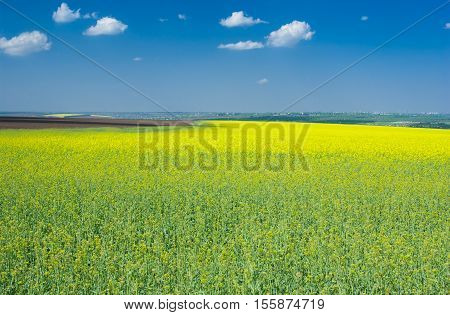 Spring landscape with flowering rape-seed field near in central Ukraine.
