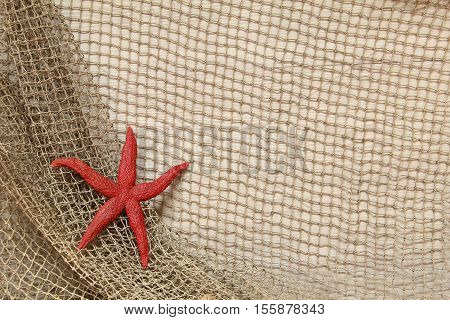 Starfish / Starfish lie on a fishing net