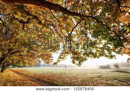 Autumn branches overhanging a carpet of golden leaves and a path leading through a misty field during sunrise