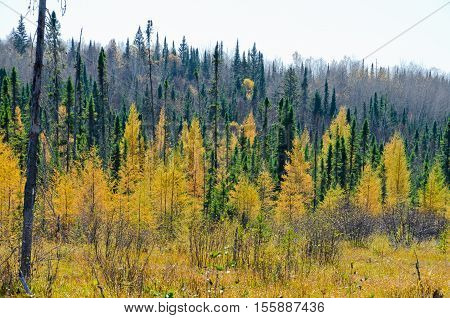 Northern Ontario Forest in Autumn time. Canada.