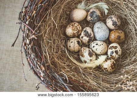 The retinue of a bird's nest with eggs postponed