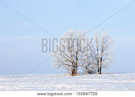 Walk through the beautiful winter scene in Russia