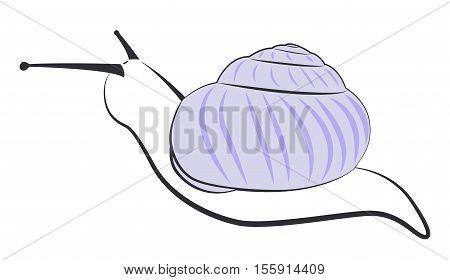 The contours of a snail with a purple shell. Simple vector illustration.
