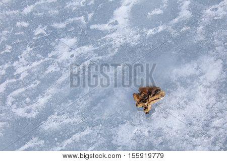 Oak Leaf In The Ice