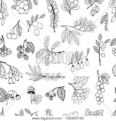 Seamless black and white background. Garden and wild berries. background