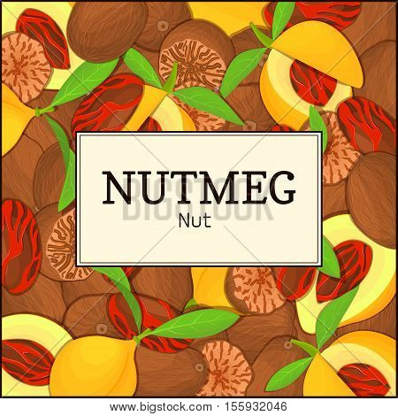 The rectangular frame on nutmeg background. Vector card illustration. Nuts spice frame, nutmeg fruit in the shell, whole, shelled, leaves, appetizing looking for packaging design of healthy food