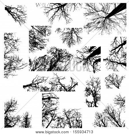 Set of different black tree silhouettes isolated on white background