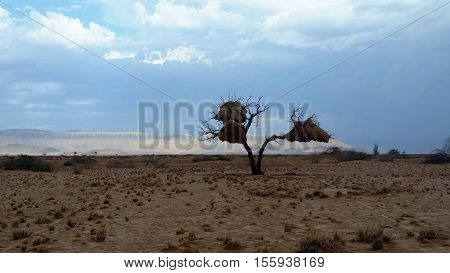 View towards the Naufeldt Mountains in Namibia as a storm builds with a tree with sociable weaver nests in the foreground