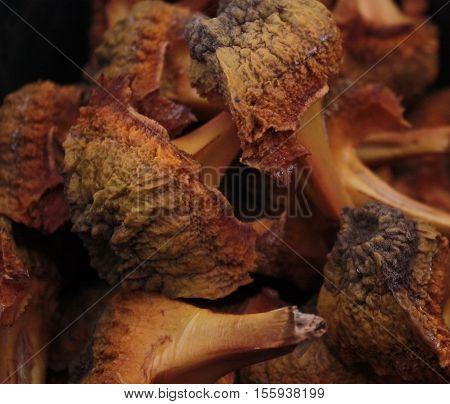 Closeup of Cicad or Cycad seed husks