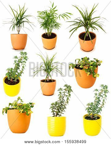 Collection of various potted plants isolated on white background
