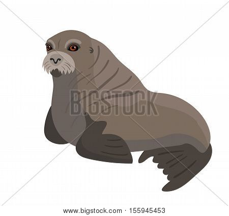 Vector female walrus isolated on white background