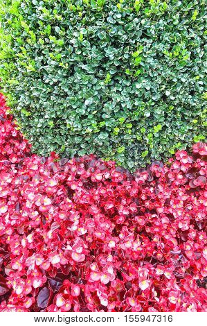 Background Of Red And Green Plants