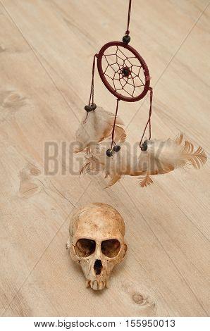 Vervet monkey skull displayed with a dream catcher
