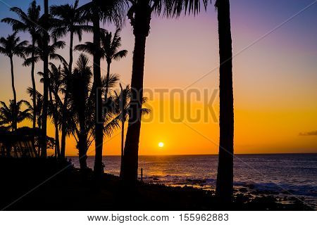 coconut palms are silhouetted against a goden maui sunset over the pacific ocean north shore of maui hawaii.