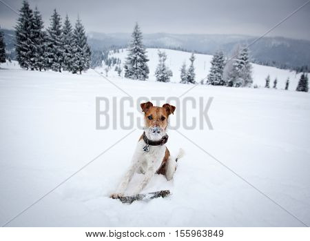 cute dog playing in snow
