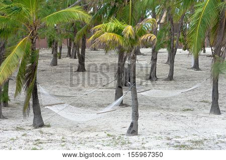Hammocks Tied To Palm Trees In A Tropical Island