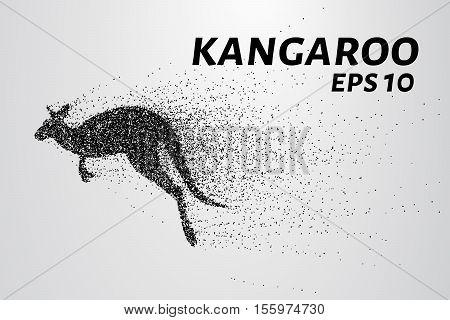 Kangaroo of particles. Kangaroo consists of small circles and dots. Vector illustration