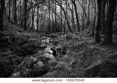 An image capturing Venford Brook in Black and White shot on Dartmoor, Devon, England, UK.