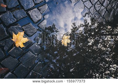 Bright yellow leaves in puddle on ground.