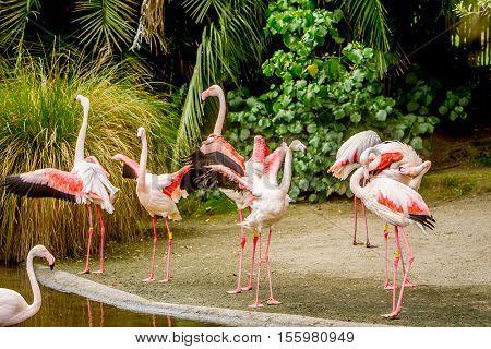 Flamingo Awesome flamingo outdoor shot. Animal shot capturing flamingo.