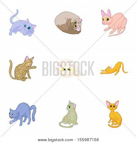 Kitty icons set. Cartoon illustration of 9 kitty vector icons for web