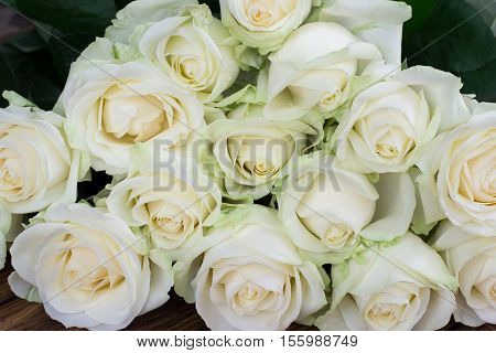 large bouquet of white roses on the entire frame closeup