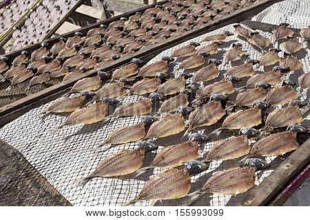 Drying mackerel fish for sale on the beach of Nazare Portugal