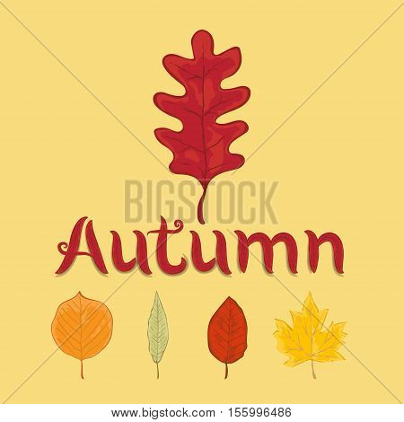 autumn leaves set isolated on yellow background. simple cartoon flat style vector illustration.