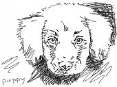 Hand drawn puppy dog. Visit my portfolio for big collection of doodles poster