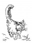 Hand drawn kitty. Visit my portfolio for big collection of doodles poster