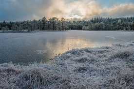 Bog landscape in December with frozen lake.
