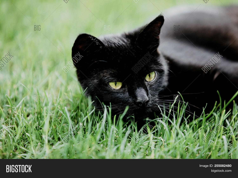 Cute Black Cat Lying Image Photo Free Trial Bigstock