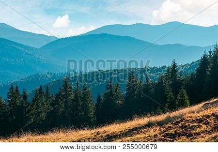 Spruce Forest On The Grassy Meadow. High Mountains In The Distance. Beautiful Autumn Scenery. Creati