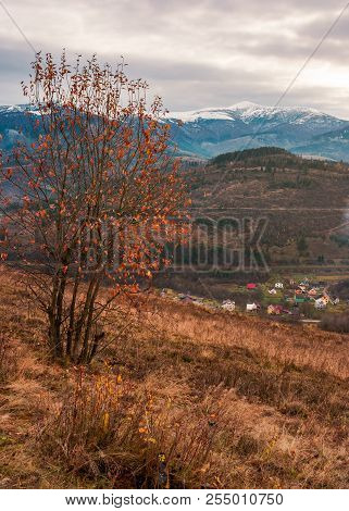 Tree In Red Foliage On Hillside. Distant Mountain With Snowy Top. Village Down In The Valley. Gloomy