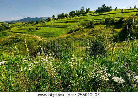 Beautiful Rural Area In Mountains. Lovely Summer Scenery In Afternoon. Path Along The Agricultural F