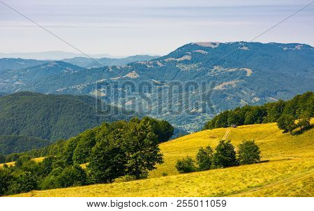 Path Down The Alpine Grassy Meadow. Mountain Range In The Distance. Beech Forest On Hills. Beautiful
