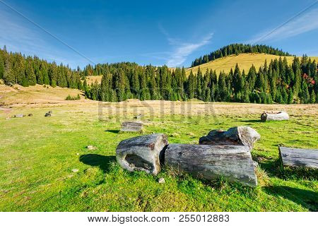 Stumps And Logs On A Grassy Meadow. Spruce Forest On The Hill. Beautiful Landscape In Mountain On A
