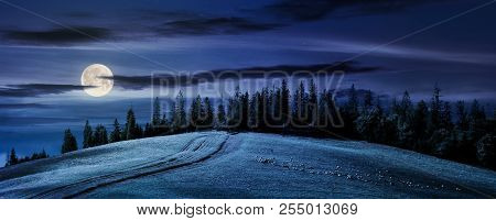 Road Uphill In To The Forest At Night In Full Moon Light. Beautiful Countryside Panoramic Scenery. H