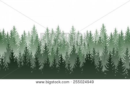Vector Seamless Green Misty Coniferous Forest Pattern Isolated On White Background