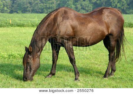 Older Horse - Enjoying Retirement!