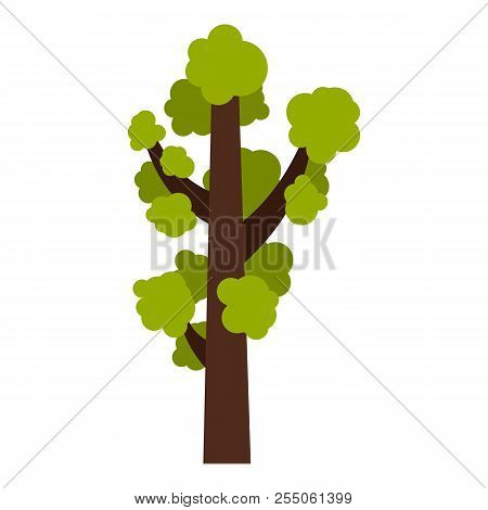 Tall Tree Icon. Flat Illustration Of Tall Tree Icon For Web