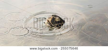 A Green Sea Turtle, Chelonia Mydas, Surfaces For A Breath, Maui, Hawaii