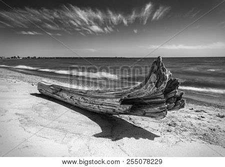 Driftwood On Beach In Dramatic Black And White. Peaceful And Inspiring Fine Art Image.