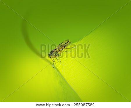 Closeup Shot Of A Sideways Snipe Fly In Green Leafy Back