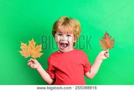 Autumn. Child With Autumn Leaf. Little Boy With Autumn Leaf. Yellow Maple Leaf. Boy Holds Yellow Lea