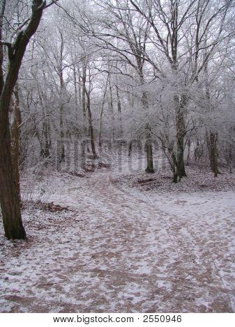 Winterwonderland