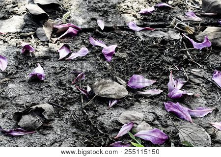 Many Leaves of flower wither on ground,corolla  on ground,  vintage color style poster