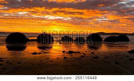 Lovely Sunrise In Front Of Mysthical Moeraki Boulders, New Zealand